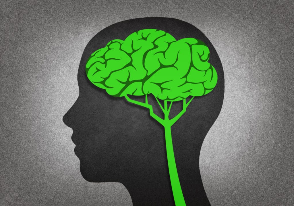 CBD Increases Blood Flow to Hippocampus
