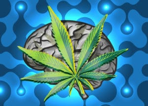 CBG Marijuana Brain Tumor Study